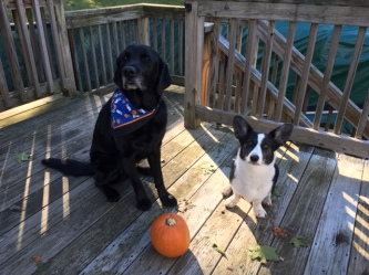 Tom in a blue, white & orange bandana sitting next to Zora with an orange pumpkin next to them