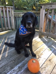 Tom sitting with a blue, white and orange bandana on behind a pumpkin